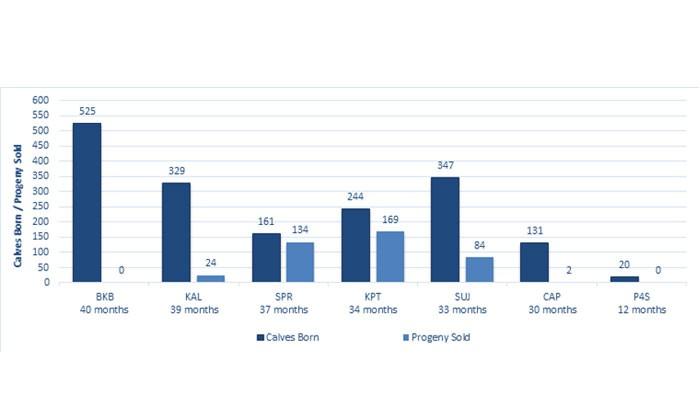 Graph 1: Progeny status